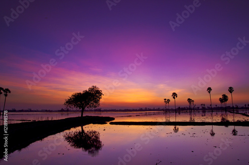 Cadres-photo bureau Violet Silhouette twilight sunset sky reflect on the water with palm tree landscape