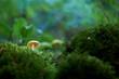 Leinwandbild Motiv Mushroom in the forest