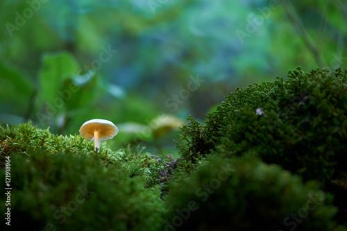 Türaufkleber Makrofotografie Mushroom in the forest