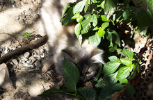 Cat Hiding Behind The Leaves