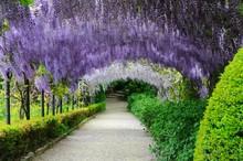Garden In Florence, Firenze, Italy