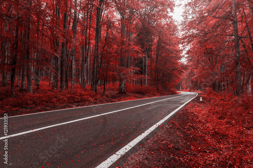 Poster Bordeaux Autumn road through red leaves forest