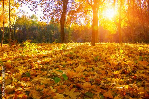Spoed Fotobehang Meloen autumn trees with the sun rays