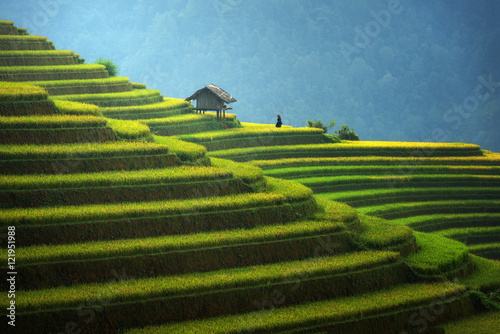 Canvas Prints Rice fields Rice fields on terraced in rainny season at Mu cang chai, Vietnam. Rice fields prepare for transplant at Northwest Vietnam