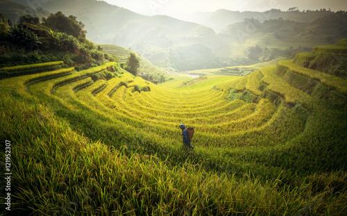 Garden Poster Rice fields Farmer in Rice fields on terraced in rainny season at Mu cang chai, Vietnam. Rice fields prepare for transplant at Northwest Vietnam