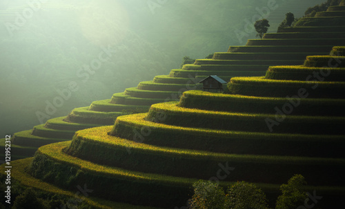 Garden Poster Rice fields Rice fields Mu Cang Chai, Vietnam