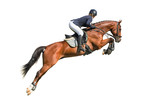 Fototapeta Konie - Rider jumping on a horse isolated on white