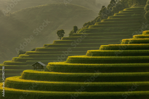 Foto auf Gartenposter Reisfelder Beautiful Rice Terraces, South East Asia,Yenbai,Vietnam