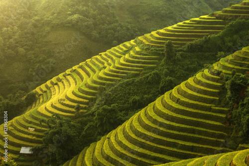 Fotobehang Rijstvelden Beautiful Rice Terraces, South East Asia,Yenbai,Vietnam