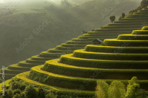 Poster Rijstvelden Rice fields on terraced of Mu Cang Chai, YenBai, Vietnam. Rice f
