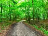 Pusta ścieżka  pomiędzy pięknymi wysokimi drzewami z zielonymi liśćmi