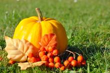 Pumpkin.Golden Pumpkin, Yellow Pumpkin, Orange Pumpkin. Pumpkin With Autumn Fruits. Colorful Pumpkins In Garden. Pumpkins And Chestnuts.