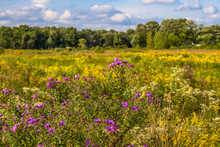 Restored Prairie In September Bloom At Middlefork Savanna, Lake County, IL