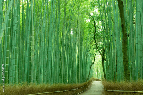 In de dag Kyoto 京都の竹林