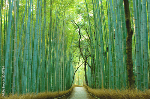 Papiers peints Kyoto 京都の竹林