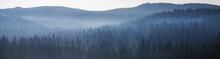 Waldpanorama Mit Nebel