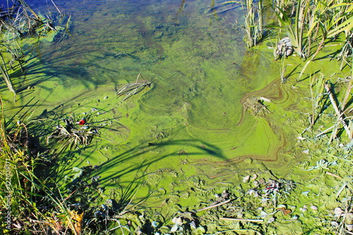 Tablou Canvas Green algae on the water surface