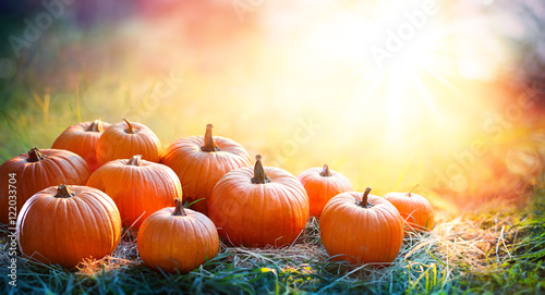 Foto op Plexiglas Herfst Pumpkins In The Field At Sunset - Thanksgiving And Fall Background