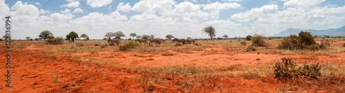 Photo  Elephant in Tsavo East National Park, Kenya