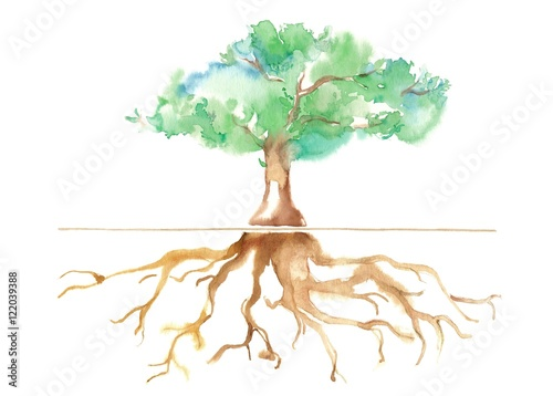 Photo  公園の大木、根