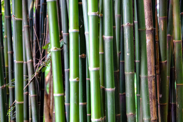 Close-up of Bamboo stems in bamboo forest