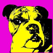 Head Shot Of Beautiful Bulldog...