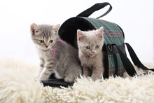 Kittens In A Bag For Transport...