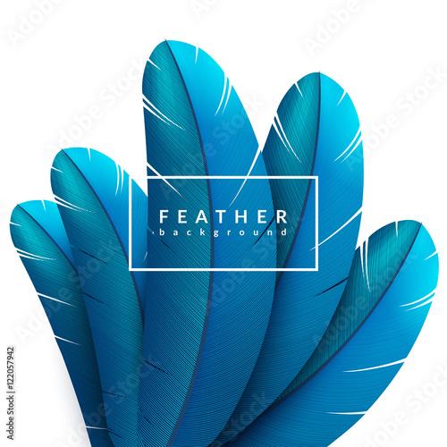 Fotografia Blue feather background