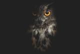 Fototapeta Zwierzęta - owl