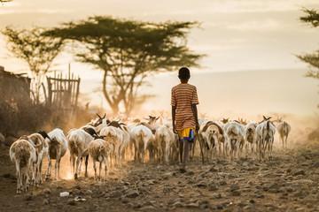African Livestock