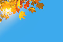 Autumnal Background, Sun, Yellow Leaves And Blue Sky