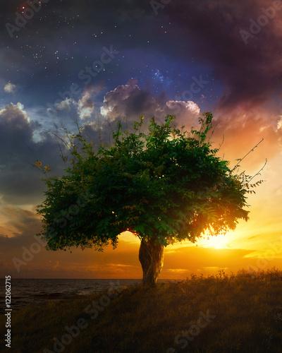 Fototapeta Single tree at sunset