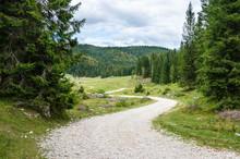 Winding Gravel Forest Road