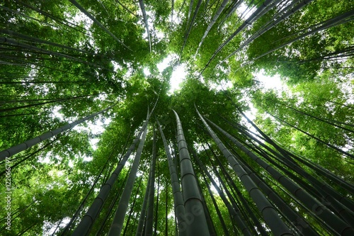Below View Of Bamboo Trees In Forest