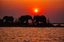Oil Painting Of Elephants At Sunset