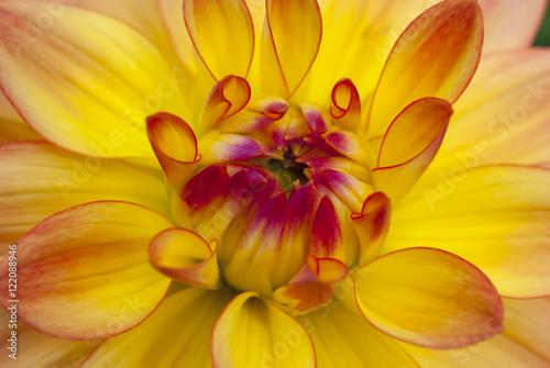 Yellow flower in macro view - 122088946