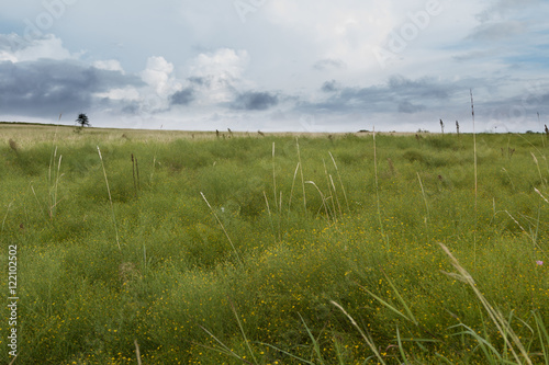 Foto op Aluminium Blauw View of green field with wild flowers and tall grass