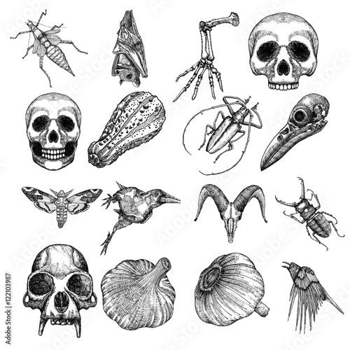 Plakát Witchcraft magic, occult attributes set, decorative elements