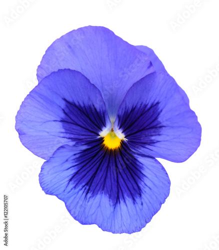 Papiers peints Pansies pansy flower