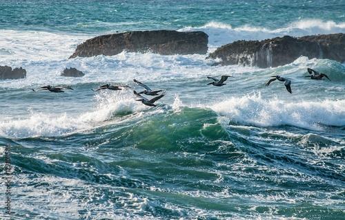 In de dag Pinguin Birds Ocean