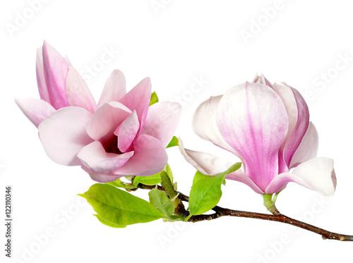 Fotobehang Magnolia pink magnolia