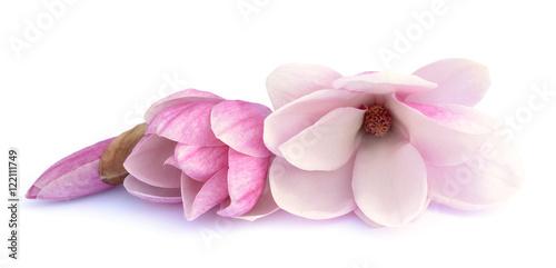 Deurstickers Magnolia pink magnolia flowe