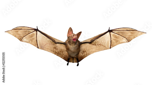 Canvas Flying Vampire bat isolated on white background