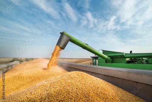Fotografia Pouring corn grain into tractor trailer