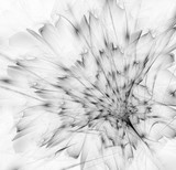 Black and white gentle fractal flower computer generated image - 122147359
