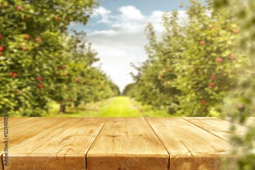 Fotografia wooden desk and trees