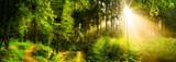 Fototapeta Las - Waldweg neben einem Bach, idyllischer Sonnenaufgang im Wald