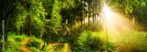 Garden Poster Forest Waldweg neben einem Bach, idyllischer Sonnenaufgang im Wald