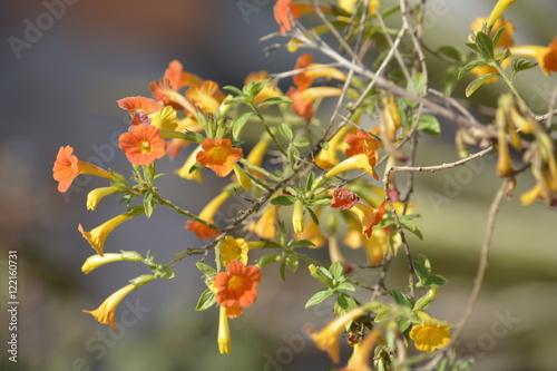 Papel de parede flores de fundo com o ceu brilho de natureza