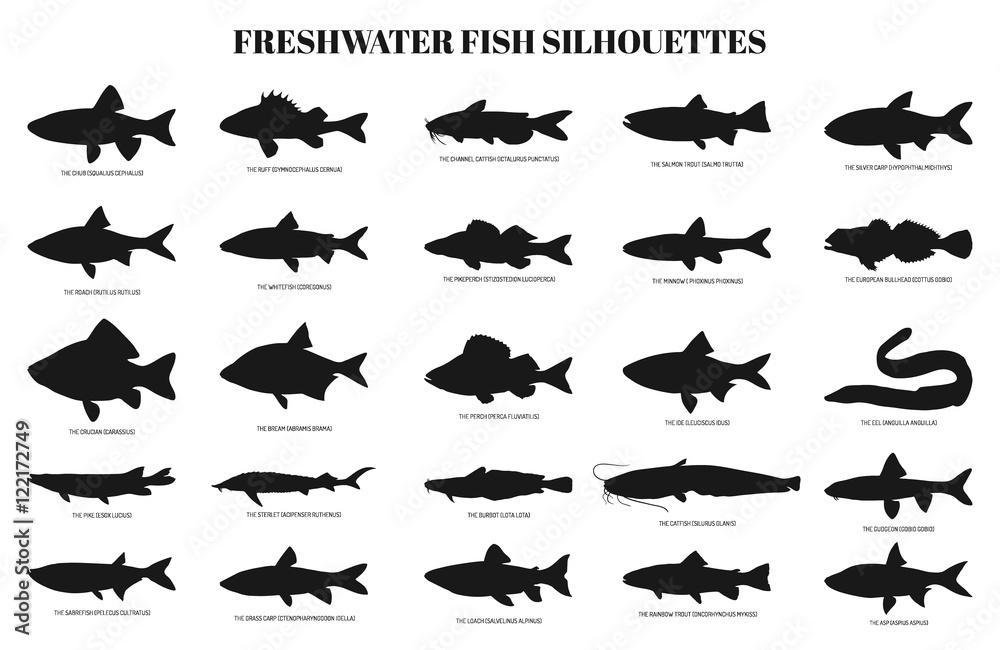 Fototapeta freshwater fishes silhouettes